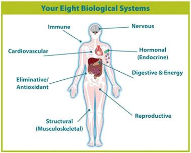 biological-sistems
